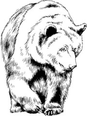 bear drawn with ink from the hands of a predator tattoo logo