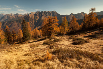 Autumn colored view over a forest in the Alps