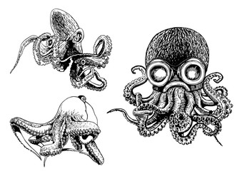 Graphical set of octopuses isolated on white  backgroud,vector illustration