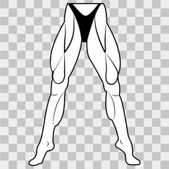 Vector image lower body woman. The muscles of the legs on a transparent background