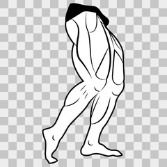 Vector image lower body man. The muscles of the legs on a transparent background
