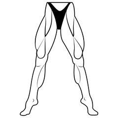 Vector image lower body woman. The muscles of the legs. White background