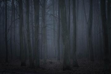 Papiers peints Forets dark forest in twilight