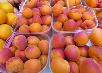 Containers of apricots