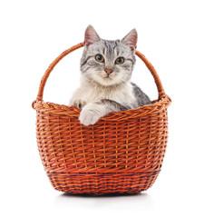 Kitten in a basket.