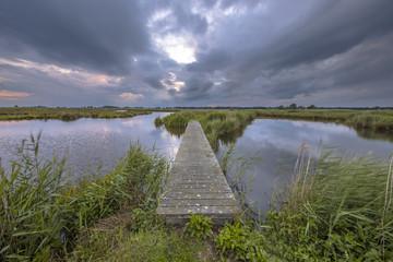 Wall Mural - Wooden footbridge in wetland nature reserve