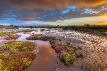 Sunrise over Salicornia Estuary