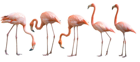 Door stickers Flamingo Beautiful flamingo bird isolated