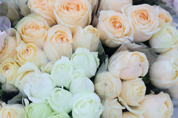 Beautiful white and cream rose for Valentine's Day