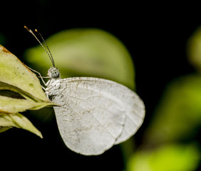 Closeup of white butterfly on green leaf. Selective focus and crop fragment.