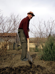 Senior man digging in the vegetable garden