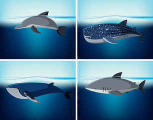 Four types of wildlife in the ocean