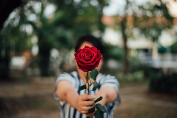 Red rose flower with human hand in Valentine's Day