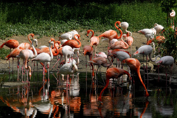 beautiful flamingo in a natural park