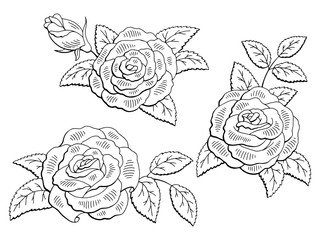 Rose flower graphic black white isolated sketch set illustration vector