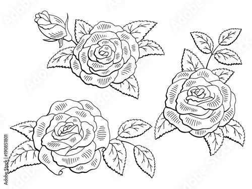 Rose Flower Graphic Black White Isolated Sketch Set Illustration