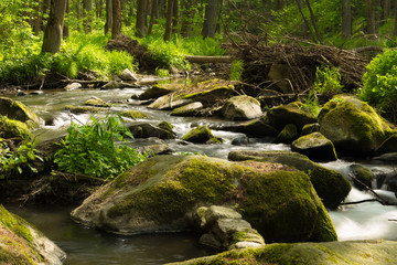 Aluminium Prints Forest river small mountain wild river in spring