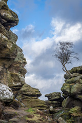 Brimham Rocks lone tree on rock outcrop in Yorkshire