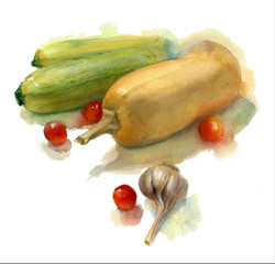 Watercolor painting still life. Zucchini and pumpkin on white background.