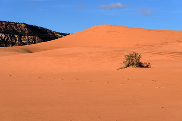 Blue Sky against Pink Sand Dune, Coral Pink Sand Dune State Park, Utah, USA