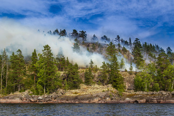 Smoke rises from the forest. The forest is burning on the island. Fire in the wild. The trees are burning on the island. Smoke over the forest. Forest fires.