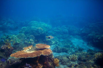 Underwater panorama of coral reef. Undersea landscape photo.