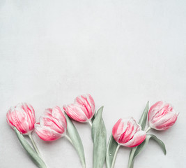 Lovely pastel pink tulips at light background, top view. Layout for springtime holidays. Mother day greeting card