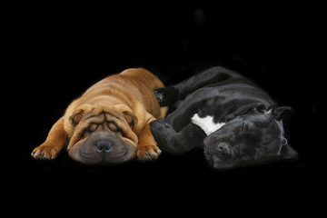 beautiful two puppy dogs sleeping