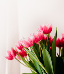 Pink tulip flowers for spring background top view in flat lay style. Womans or Mothers Day greeting card