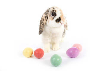 Easter: Rabbit Surrounded By Colorful Easter Eggs