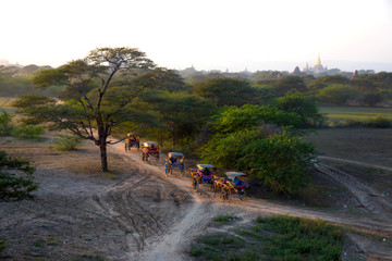 Vintage and traditional cow carriages running on dusty road, classic carriages transport in Bagan, Myanmar.