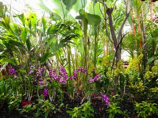 Botanik in Singapur