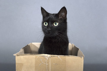 Black cat on a black background animal in a box