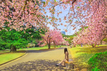 Unidentified woman relaxes under blossoming cherry tree in Shinjuku Gyoen National Garden. Shinjuku Gyoen is the best places in Tokyo to see cherry blossoms. Springtime, blu sky.
