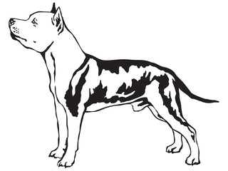 Decorative standing portrait of American Staffordshire Terrier