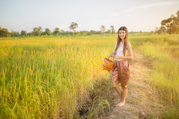 Thai beautiful girl hold wicker basket in Esan traditional dress standing on rice field, countryside, Thailand. This is lifestyle people in countryside Thailand culture.