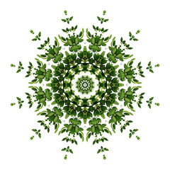 Abstract green background flora mandala pattern, wild climbing vine liana plant with kaleidoscope...
