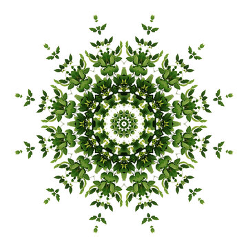 Abstract green background flora mandala pattern, wild climbing vine liana plant with kaleidoscope effect on white background.