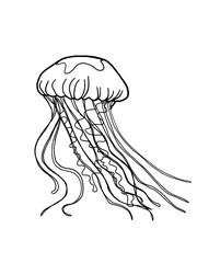 jellyfish sketch drawing