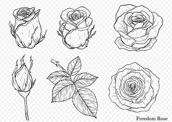 Rose vector set by hand drawing.Beautiful flower on white background.Rose art highly detailed in line art style.Freedom rose for wallpaper