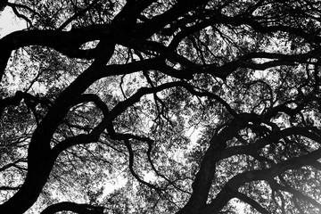 black and white tree limbs