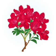 Red  rhododendron branch mountain shrub vintage vector illustration editable hand draw