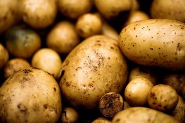 Fresh organic potatoes closeup