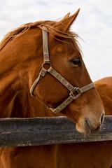 Horses of Ocala Florida