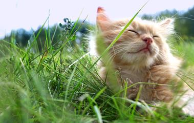 relax kitten on green grass Fototapete