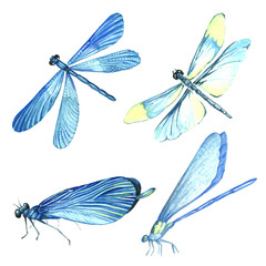 Watercolor collection of blue dragonfly illustrations.