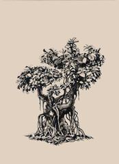 Бонсай фикус.Deciduous bonsai.