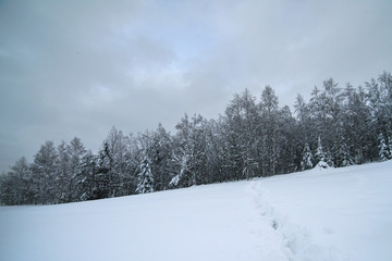 White winter landscape in the forest.