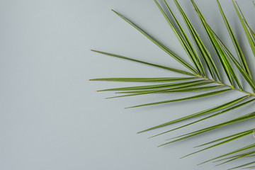 Spiky Palm Tree Leaf on Grey Stone Background. Minimalist Modern Style. Botanical Foliage Pattern. Poster Template Fashion Sales. Copy Space