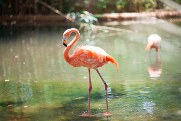 Garden Poster Flamingo Pink flamingos in the zoo of Barcelona, Spain